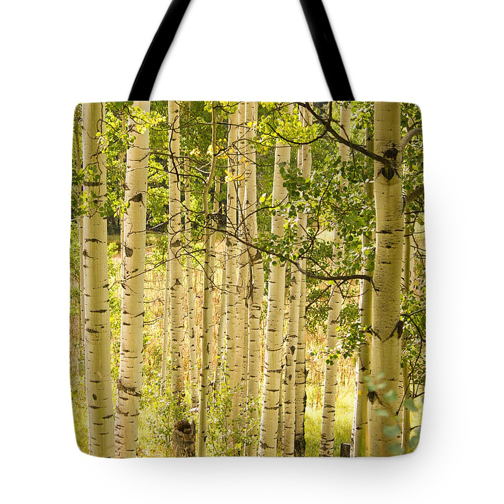 Aspen Tote Bag featuring the photograph Aspen Forest by Dawn Morrow