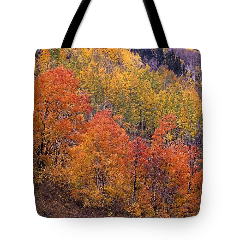 Aspen Tote Bag featuring the photograph Aspen Grove In Fall Colors by Tim Fitzharris