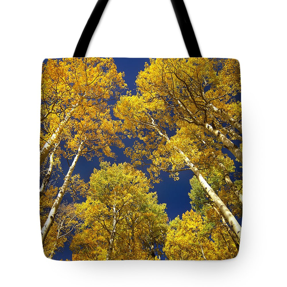 Aspen Tote Bag featuring the photograph Aspen Grove In Fall by Tim Fitzharris