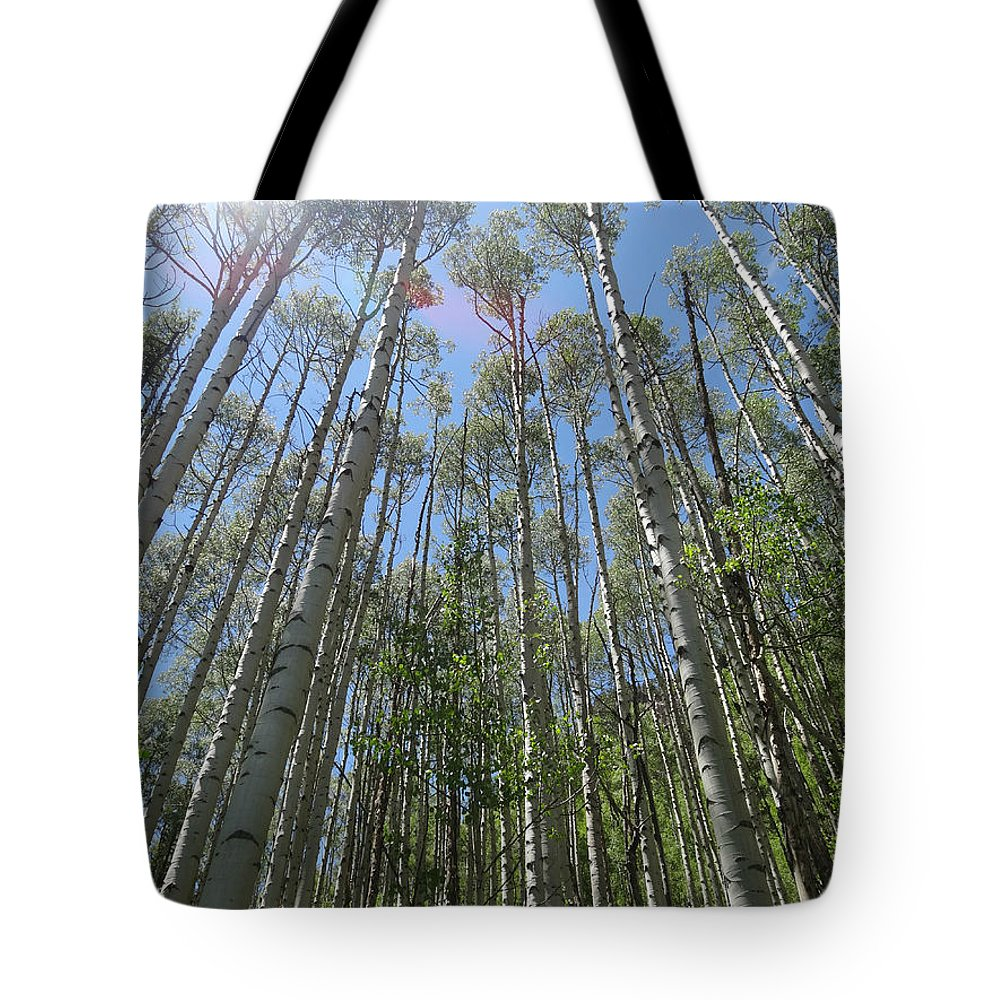 Aspen Light Tote Bag featuring the photograph Aspen Light by Dan Sproul