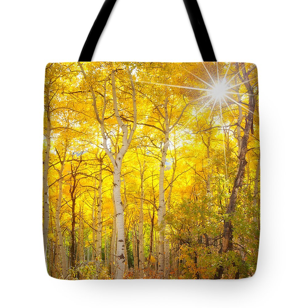 Aspens Tote Bag featuring the photograph Aspen Morning by Darren White