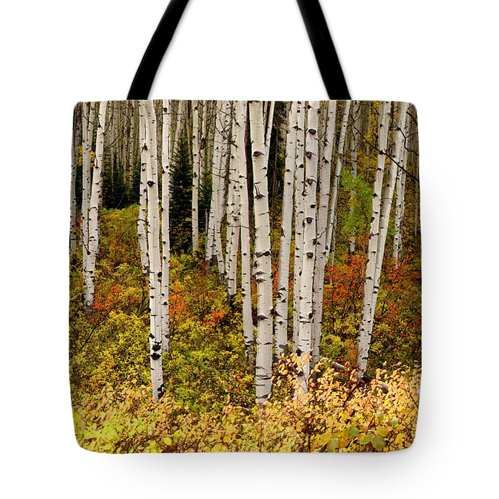 Aspens Tote Bag featuring the photograph Aspen Panoramic by Carol Milisen