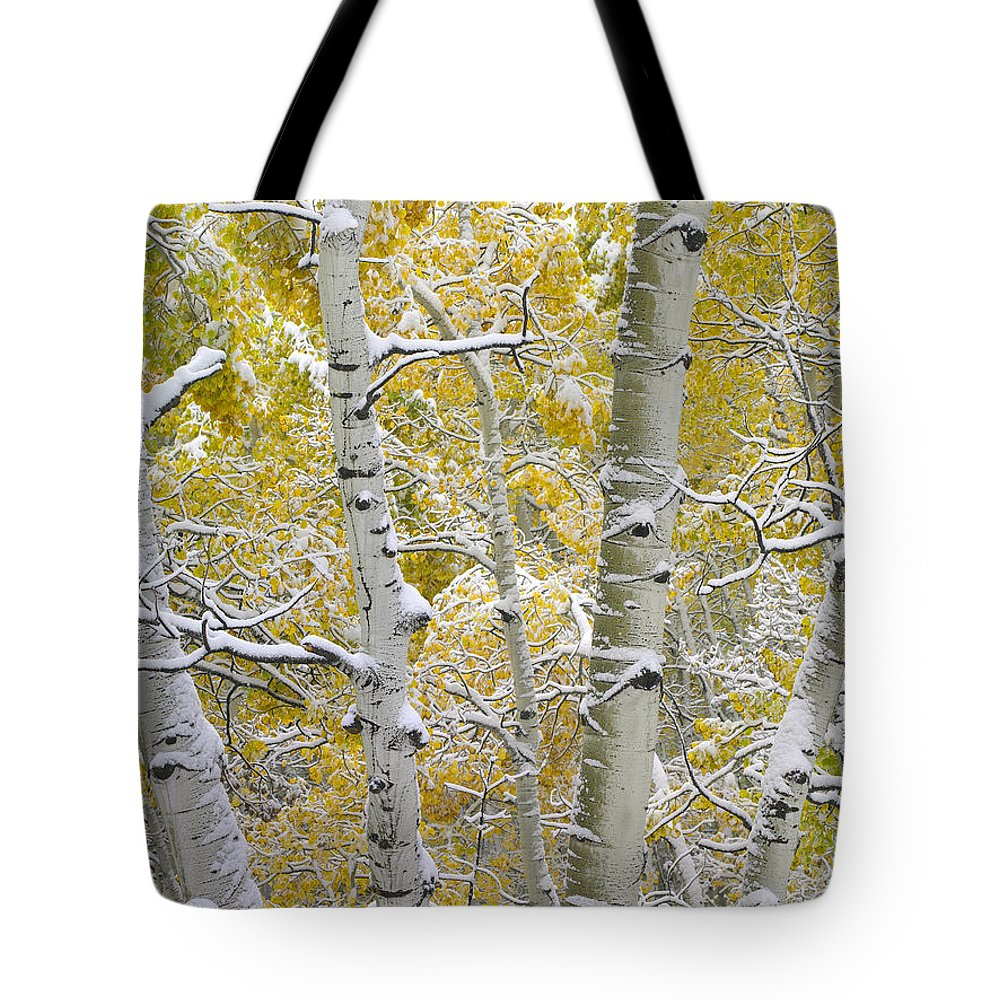 Color Image Tote Bag featuring the photograph Aspen Trees Covered With Snow by Tim Fitzharris