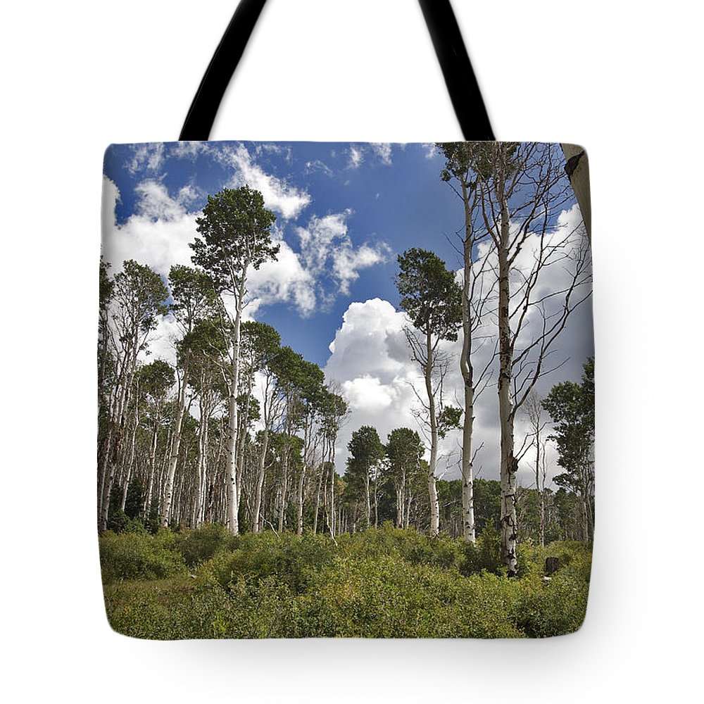 3scape Tote Bag featuring the photograph Aspen Grove by Adam Romanowicz