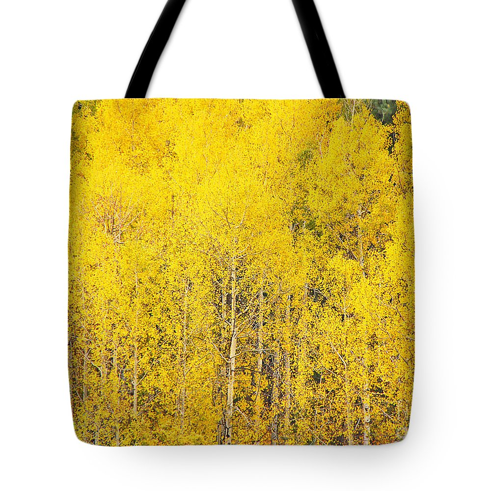 South Dakota Tote Bag featuring the photograph Aspens by Mary Carol Story