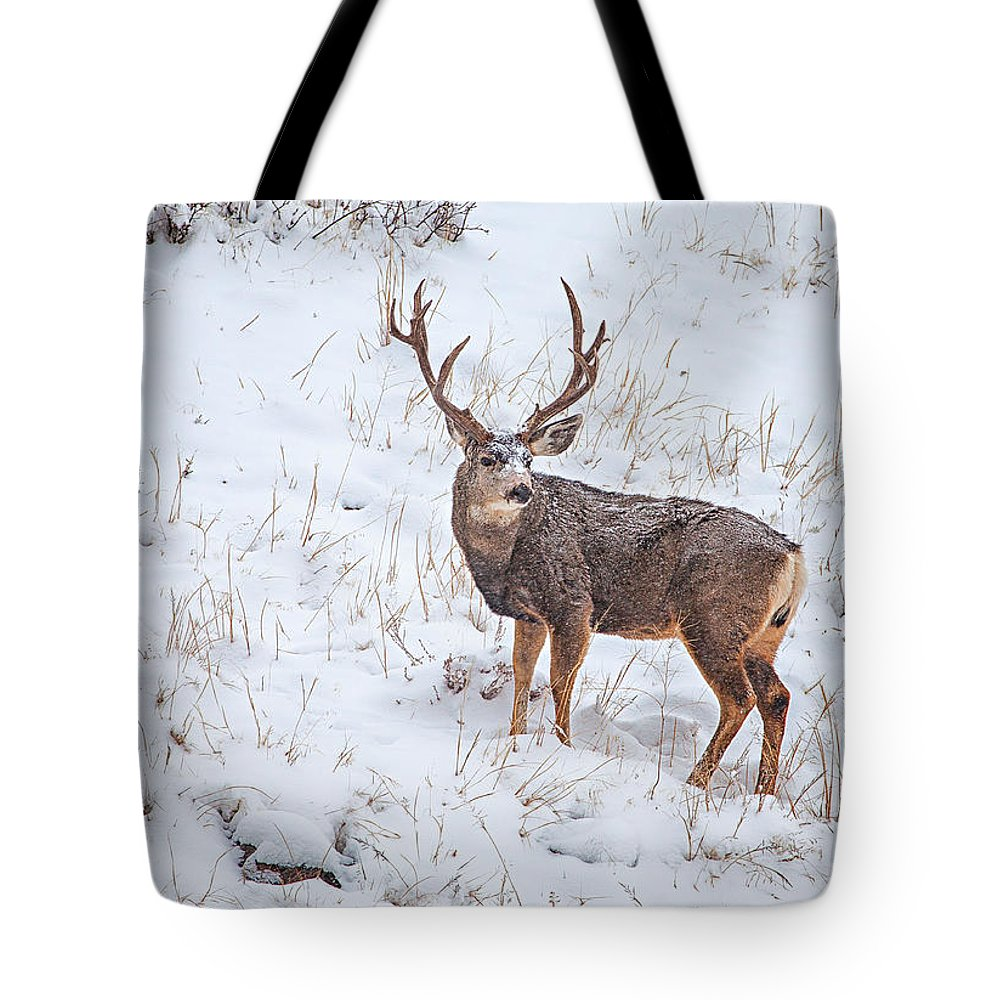 Deer Tote Bag featuring the photograph Atypical Buck by Darren White