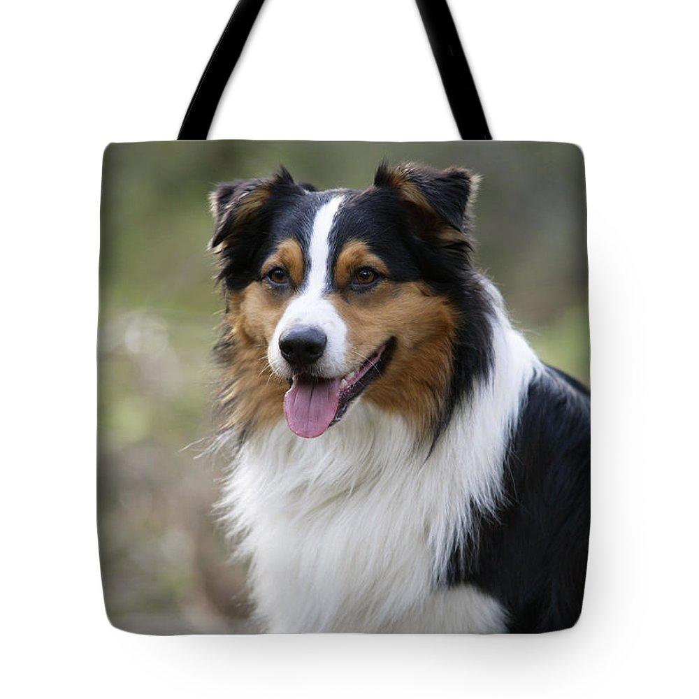 Australian Shepherd Tote Bag featuring the photograph Australian Shepherd Dog by John Daniels