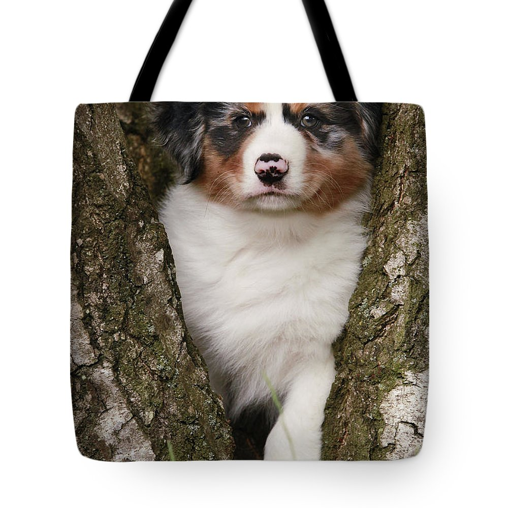 Australian Sheepdog Tote Bag featuring the photograph Australian Shepherd Puppy by Jean-Michel Labat