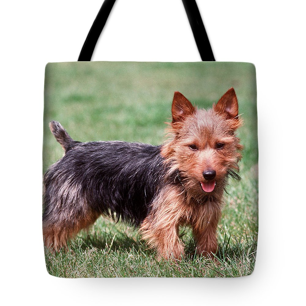 Australian Terrier Tote Bag featuring the photograph Australian Terrier Dog by John Daniels