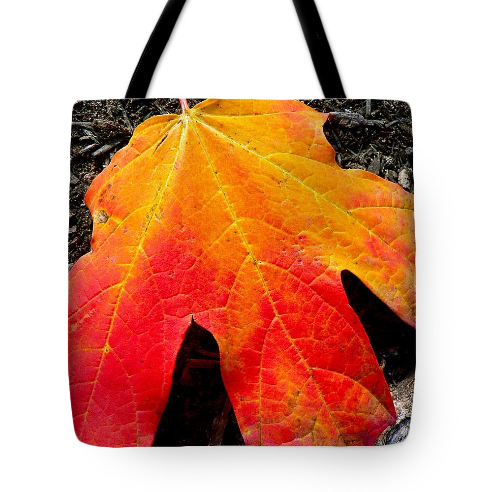 Maple Tote Bag featuring the photograph Autumn Blaze by Jean Wright