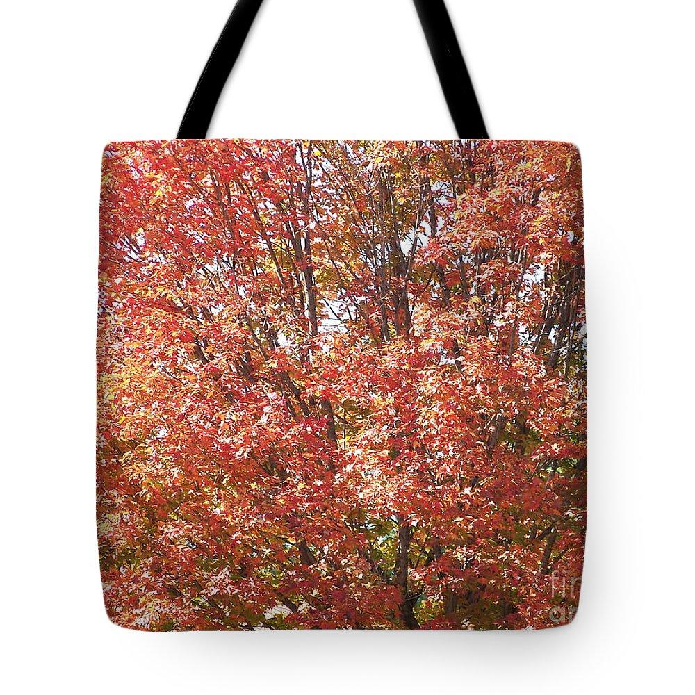 Autumn Blaze Tote Bag featuring the photograph Autumn Blaze by Kevin Croitz