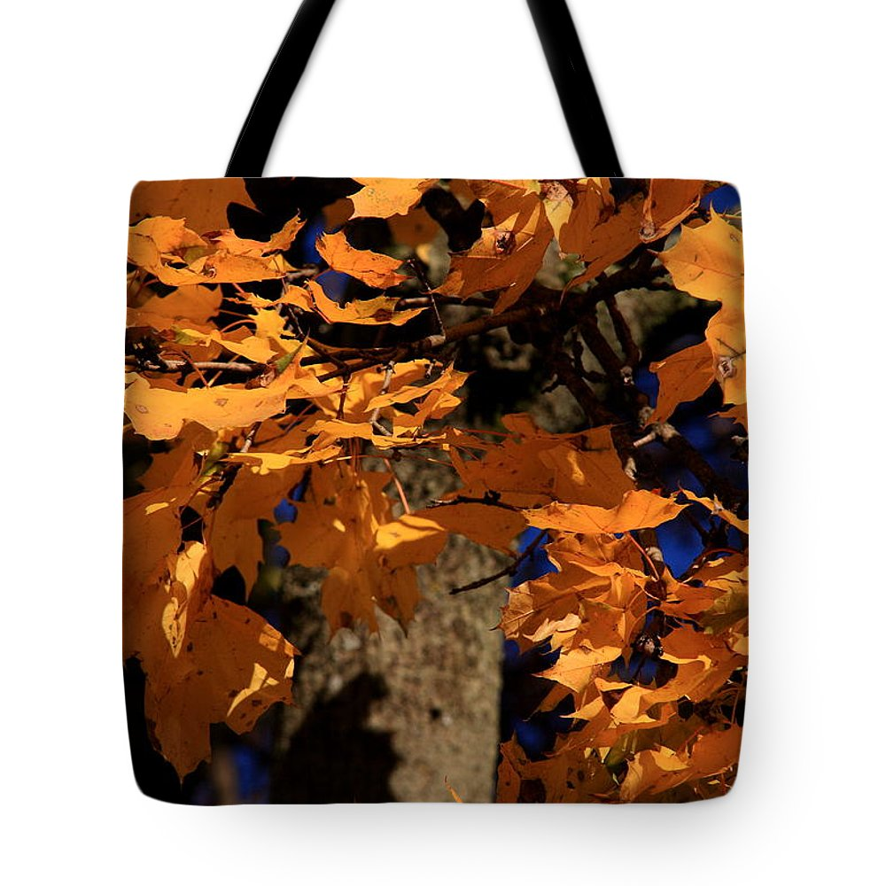 Fall Tote Bag featuring the photograph Autumn Colors by David Dufresne