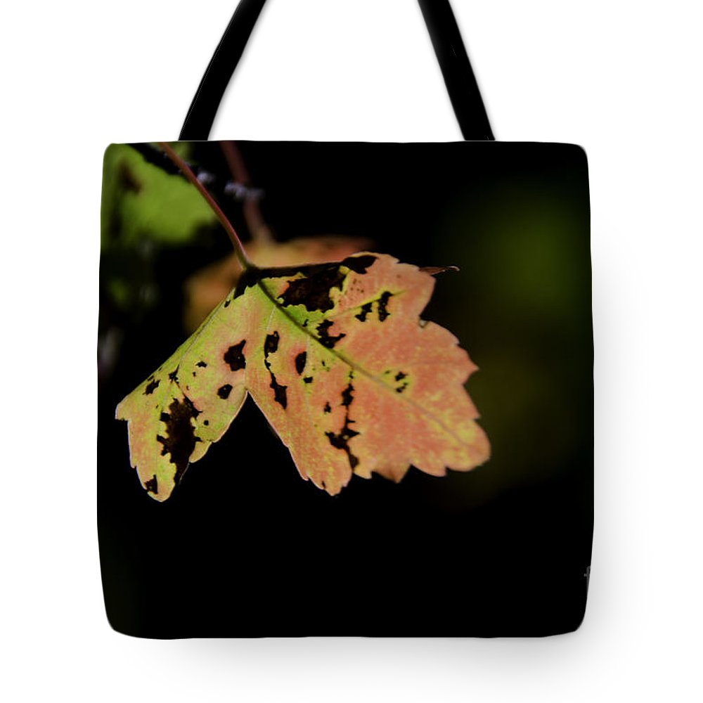 Maple Leaf Tote Bag featuring the photograph Autumn by Dale Powell