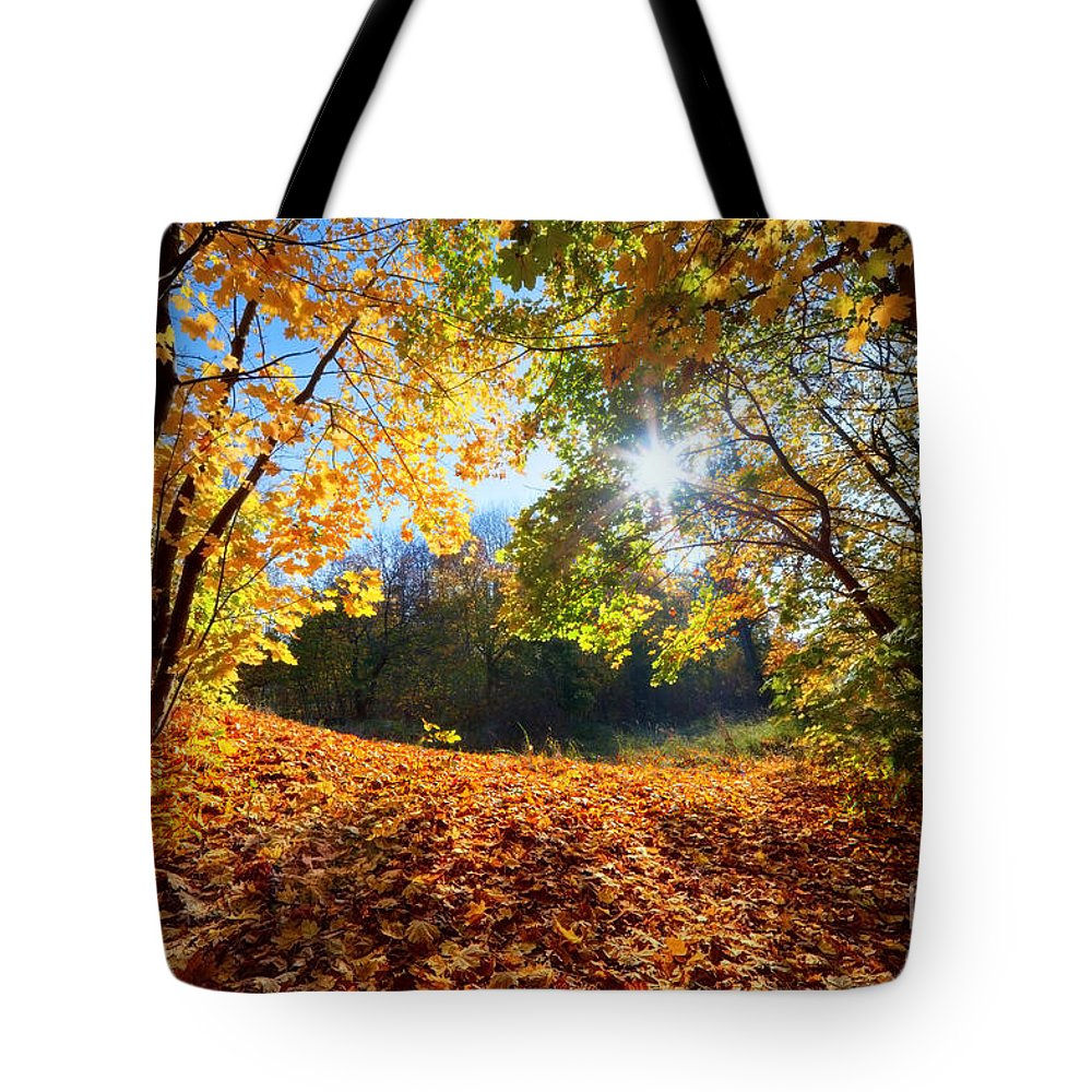 Autumn Tote Bag featuring the photograph Autumn Fall Landscape In Forest by Michal Bednarek