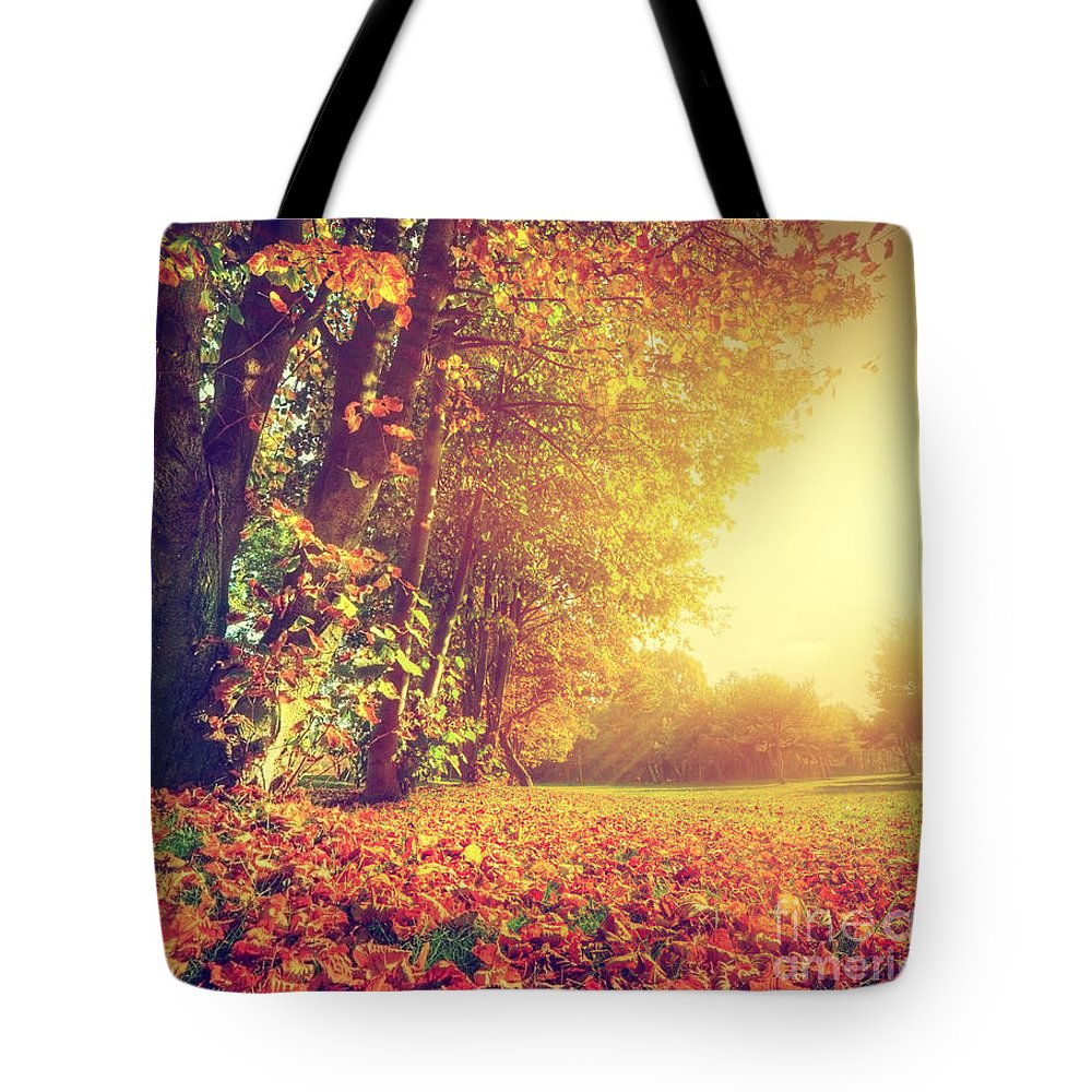 Autumn Tote Bag featuring the photograph Autumn Fall Landscape In Park by Michal Bednarek
