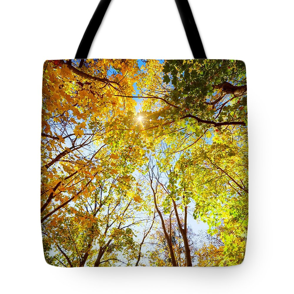 Autumn Tote Bag featuring the photograph Autumn Fall Trees by Michal Bednarek