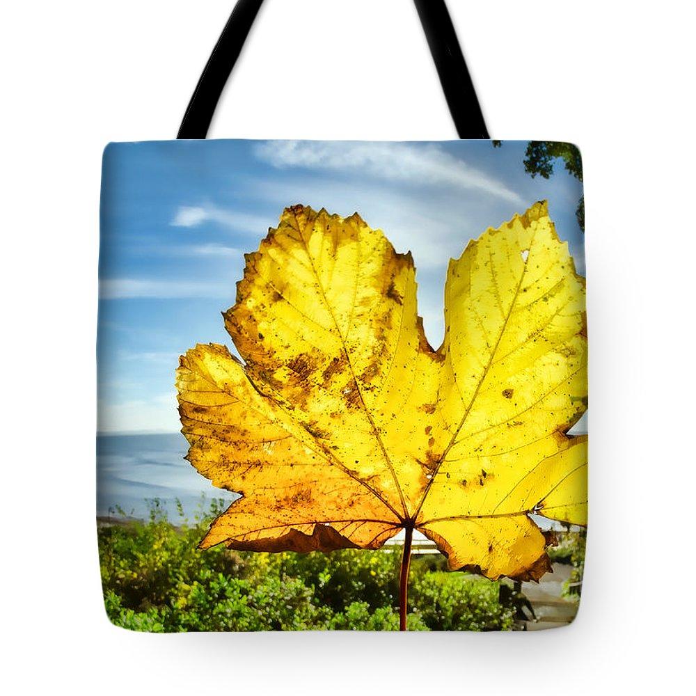 Lyme Regis Tote Bag featuring the photograph Autumn In Lyme Regis by Susie Peek