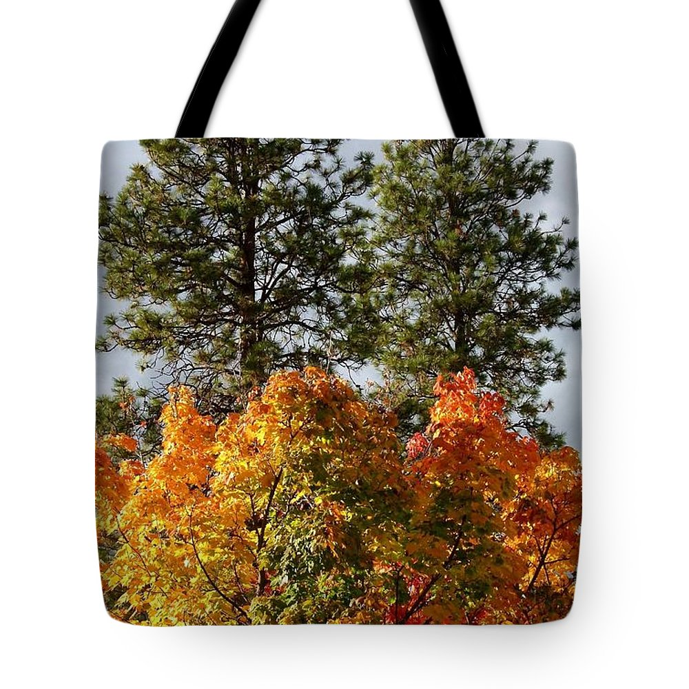 Autumn Maple With Pines Tote Bag featuring the photograph Autumn Maple With Pines by Will Borden