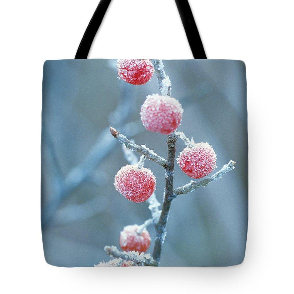 Np Tote Bag featuring the photograph Autumn Olive Elaeagnus Umbellata by Kazuma Anezaki