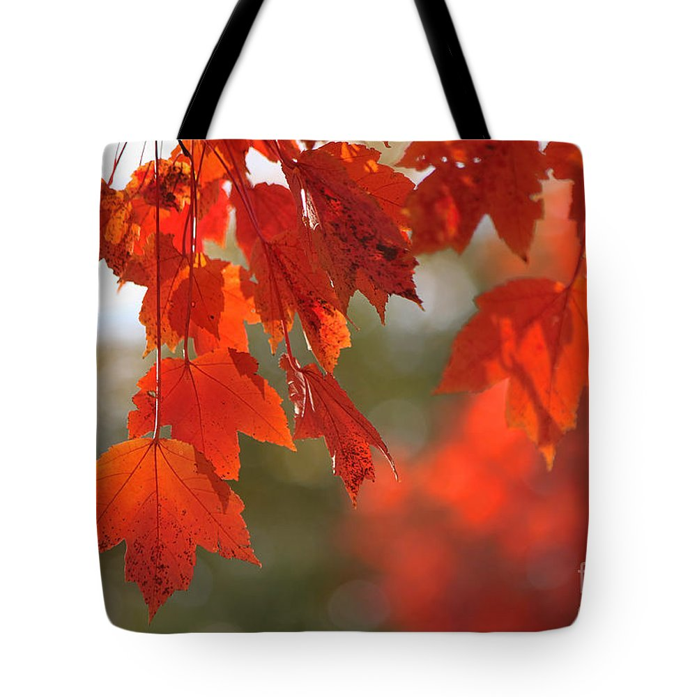 Autumn Tote Bag featuring the photograph Autumn Orange by Jeff Breiman