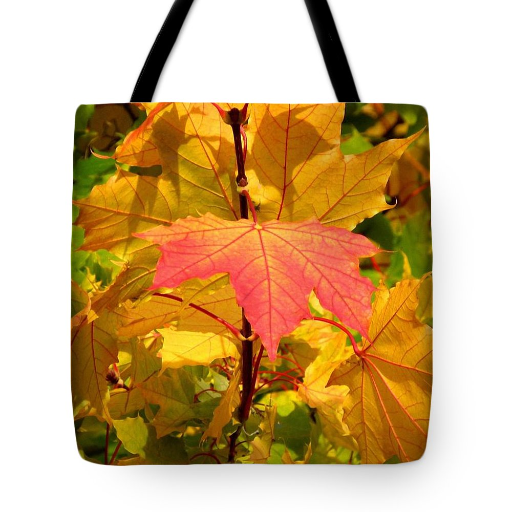 Autumn Pigmentation Tote Bag featuring the photograph Autumn Pigmentation by Will Borden