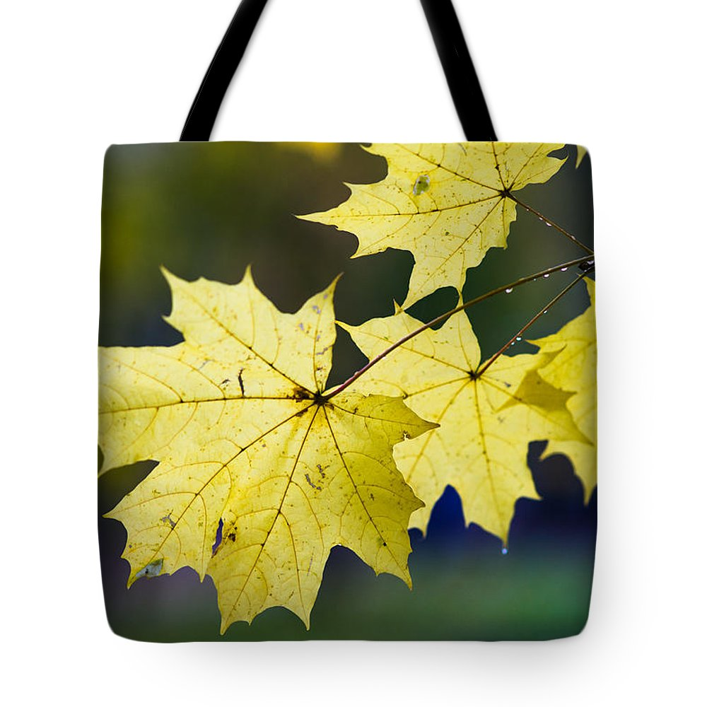 Abstract Tote Bag featuring the photograph Autumn Rain by Alexander Senin