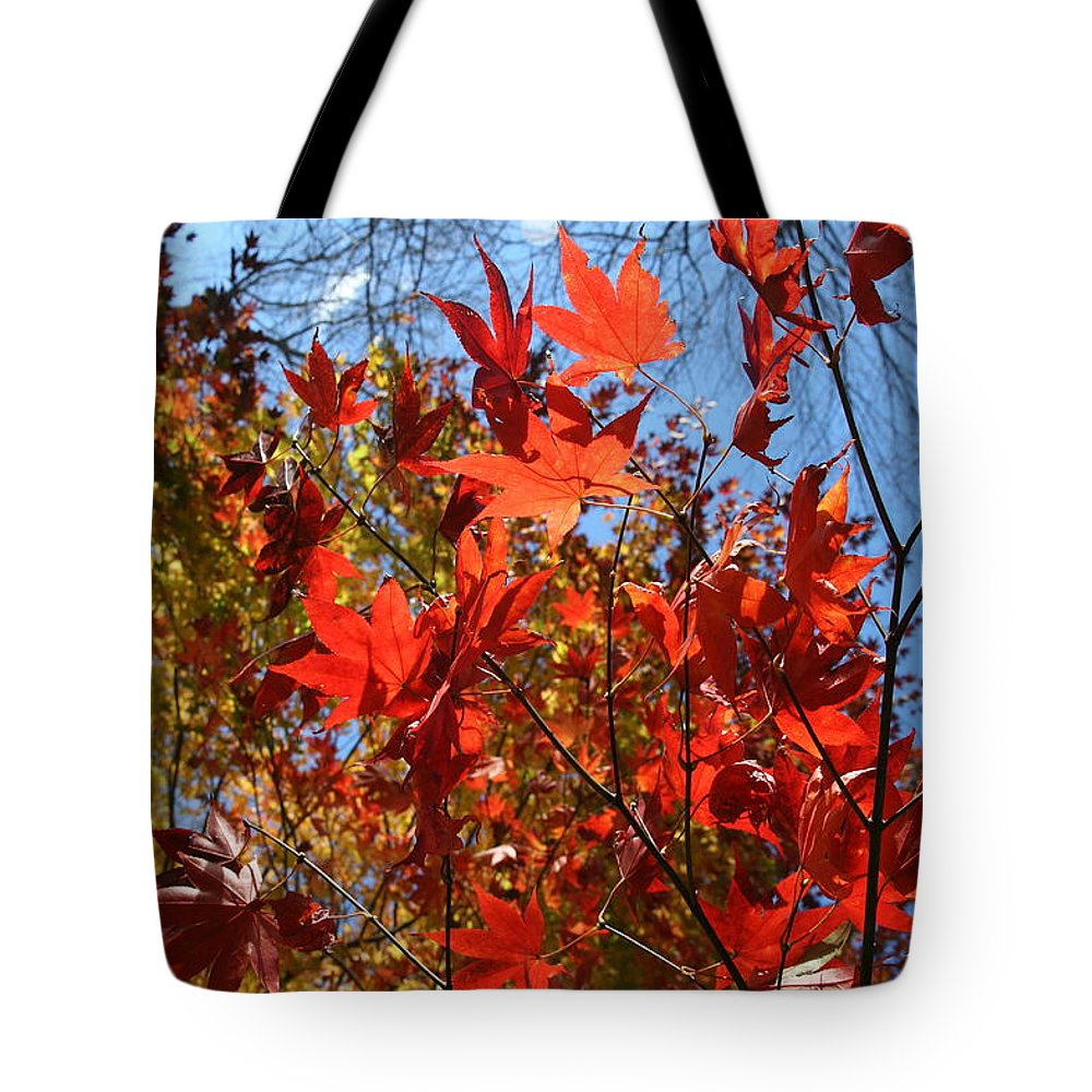 Photography Tote Bag featuring the photograph Autumn Reach by Neal Eslinger