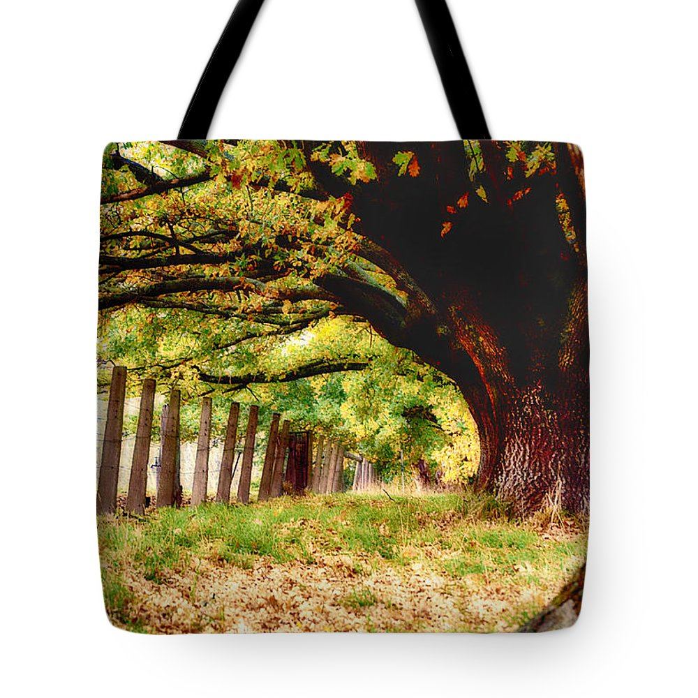 Autumn Shelter Tote Bag featuring the photograph Autumn Shelter by Douglas Barnard