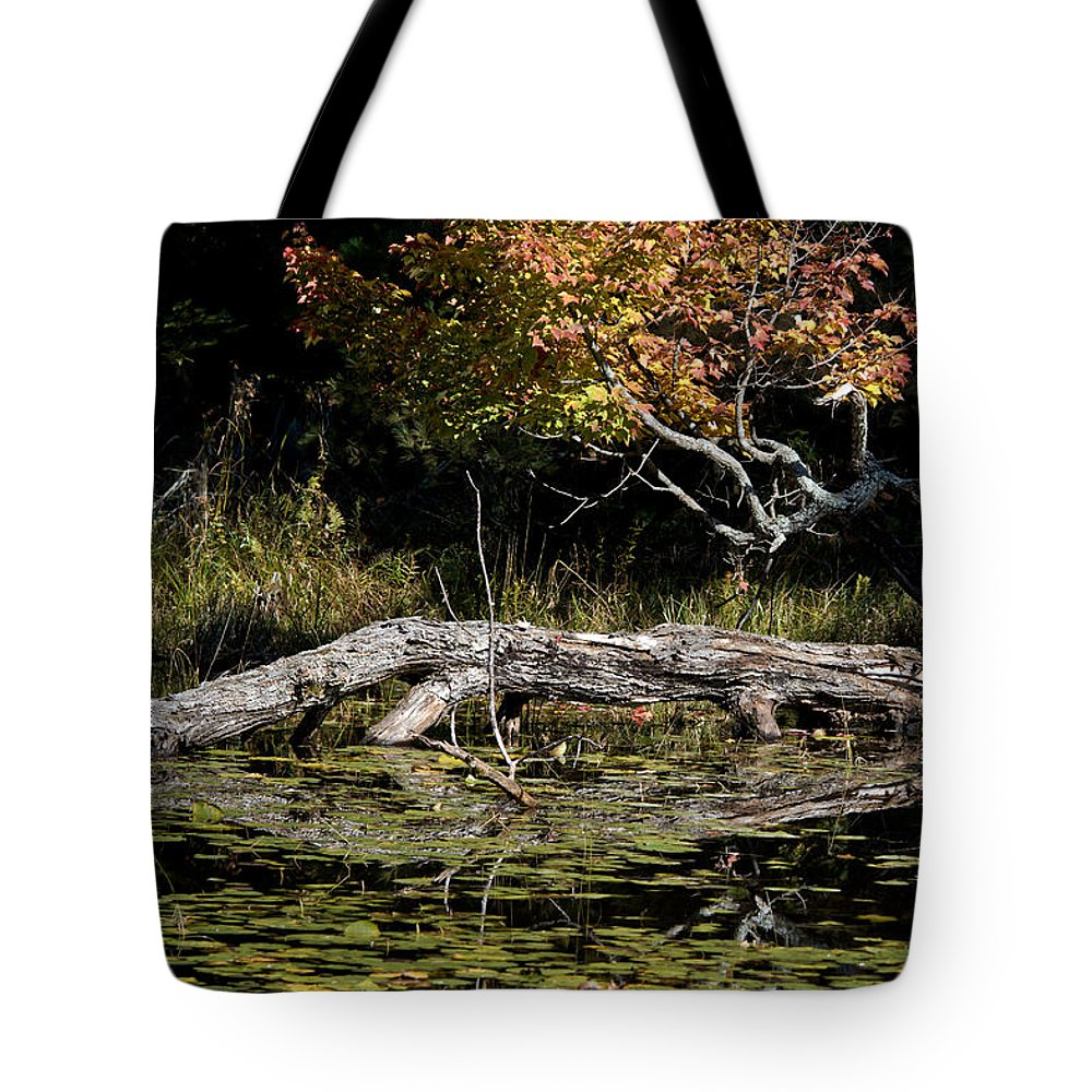 Tote Bag featuring the photograph Autumn Swamp by Cheryl Baxter