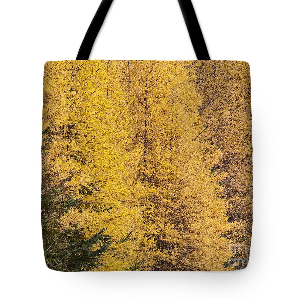 Fall Tote Bag featuring the photograph Autumn Tamaracks by Alan L Graham