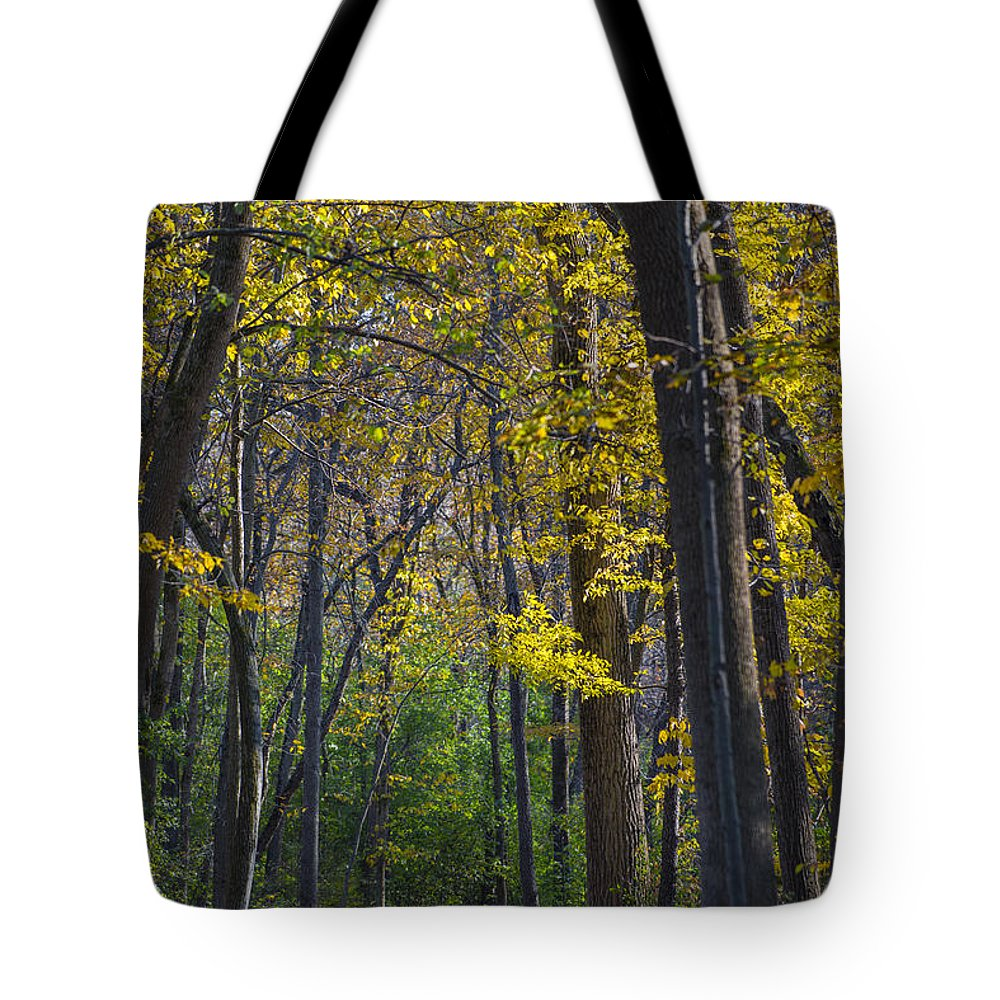 Fall Tote Bag featuring the photograph Autumn Trees Alley by Sebastian Musial
