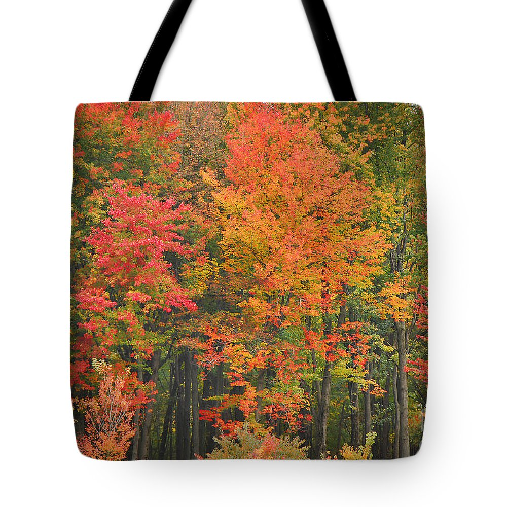 Autumn Tote Bag featuring the photograph Autumn Woods by Mary Carol Story