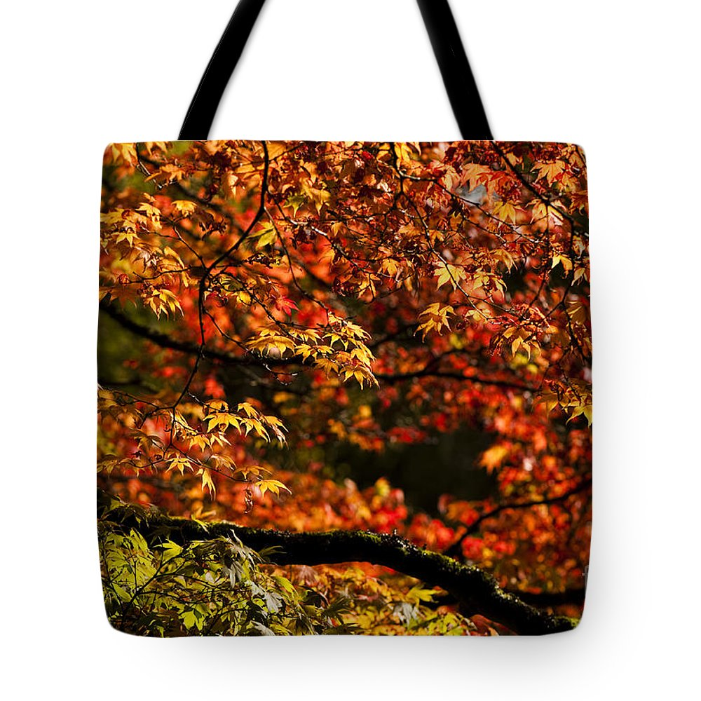 Annegilbert Tote Bag featuring the photograph Autumn's Glory by Anne Gilbert