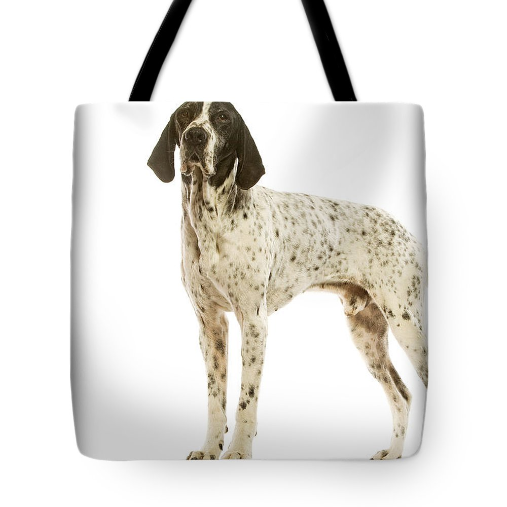 Auvergne Pointer Tote Bag featuring the photograph Auvergne Pointer by Jean-Michel Labat