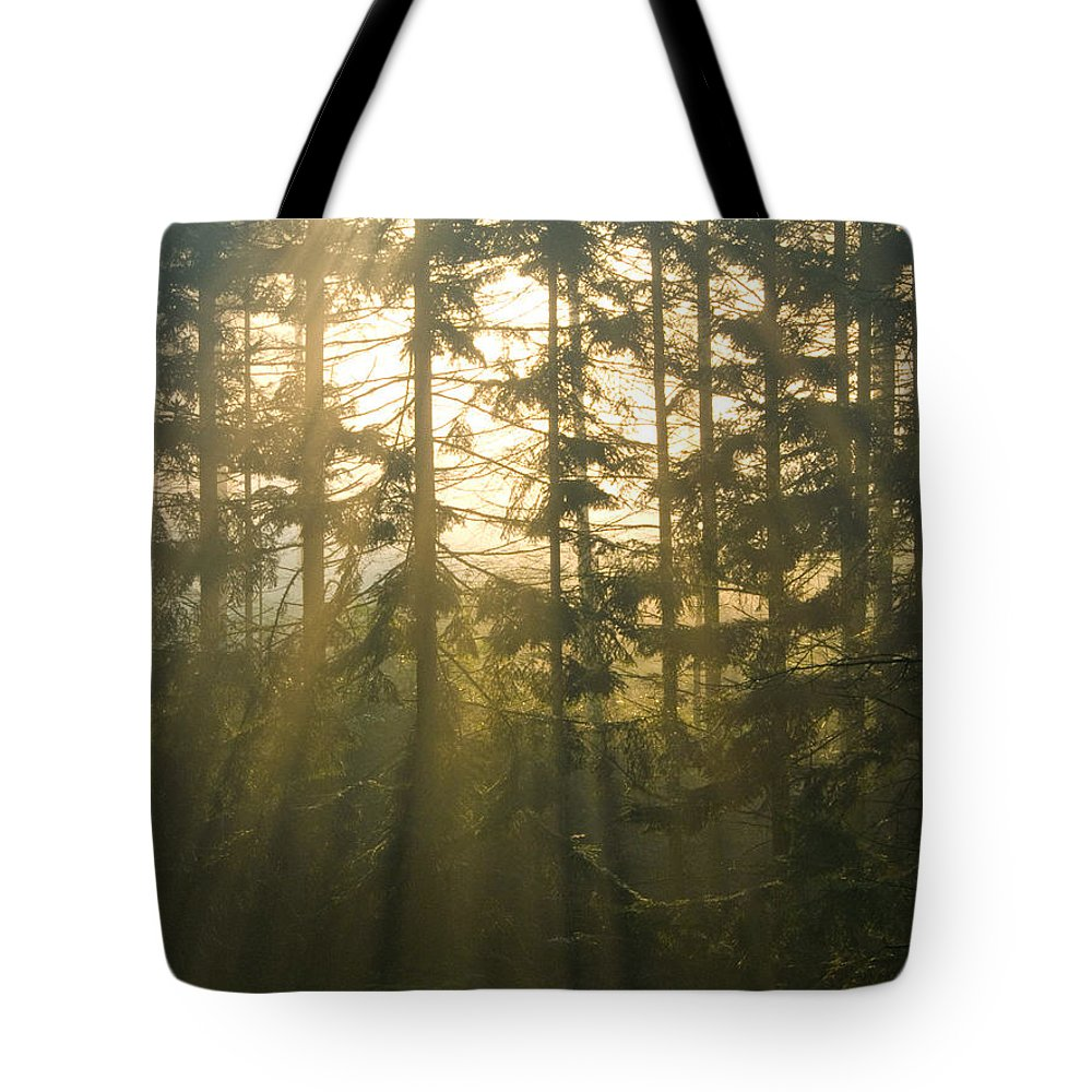 Light Tote Bag featuring the photograph Awe by Daniel Csoka