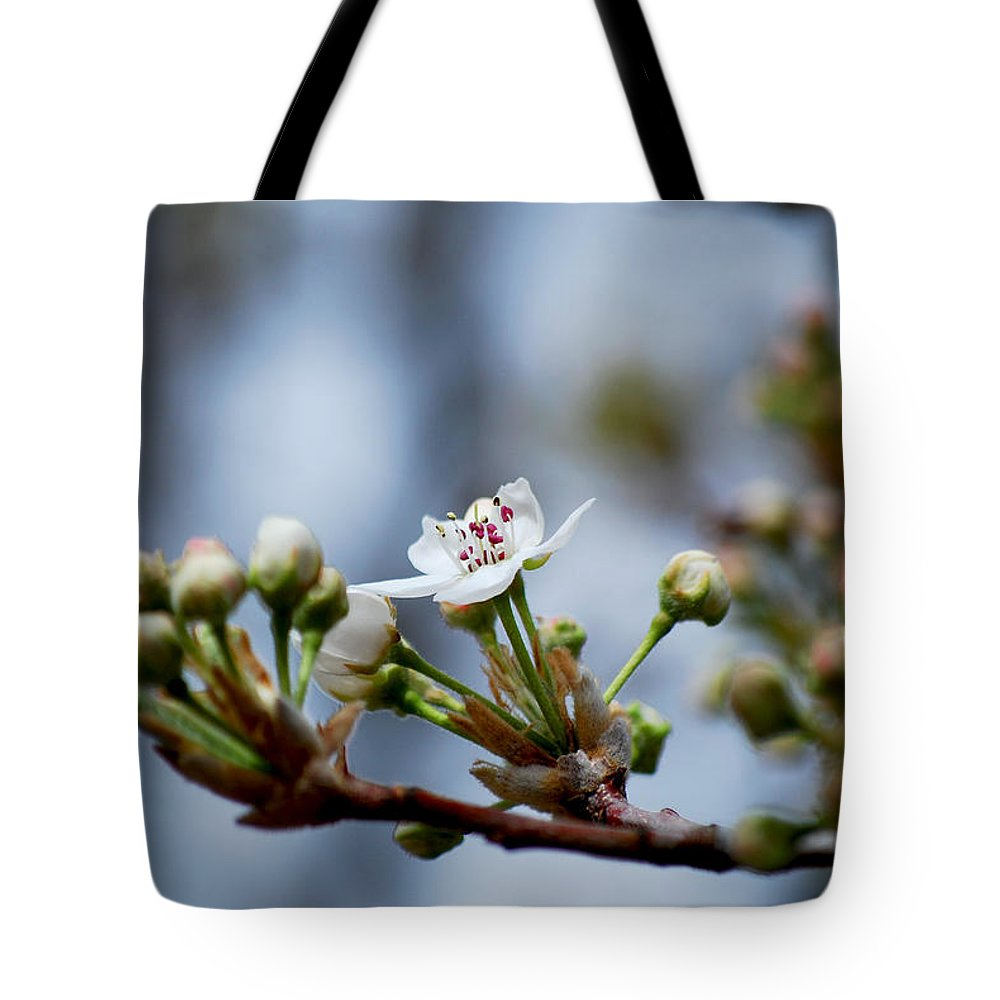 Becky Furgason Tote Bag featuring the photograph #awizardmusthavepassedthisway by Becky Furgason