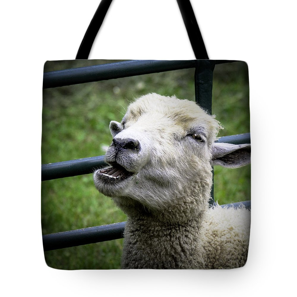 Sheep Tote Bag featuring the photograph Baa Baa Black Sheep by LeeAnn McLaneGoetz McLaneGoetzStudioLLCcom