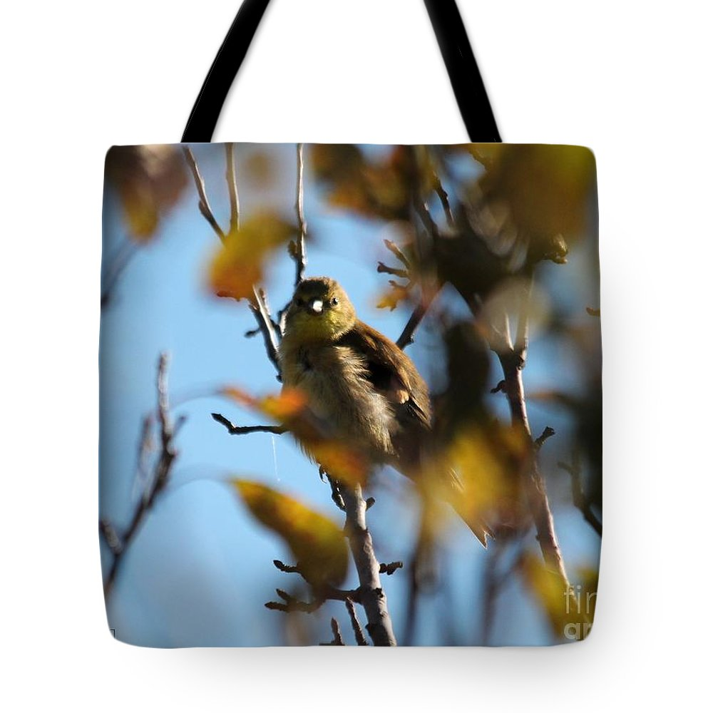 American Goldfinch Tote Bag featuring the photograph Baby American Goldfinch Learning To Fly by J McCombie