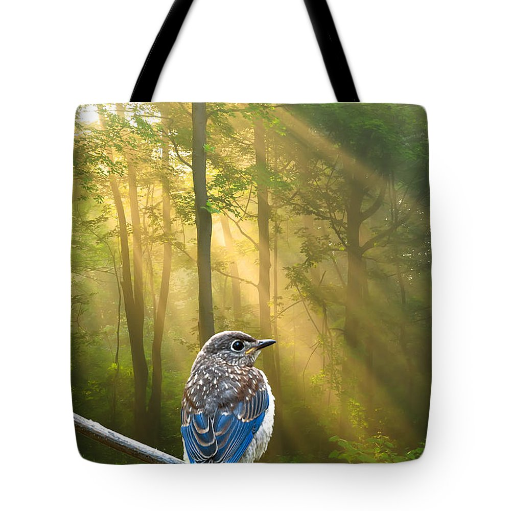 Baby Blue Bird Tote Bag featuring the photograph Baby Blue In Morning Fog Sunlight by Randall Branham