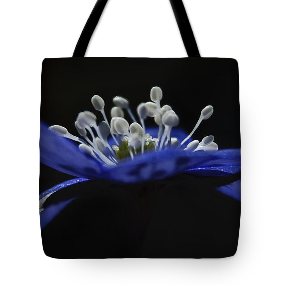 Festblues Tote Bag featuring the photograph Baby Blues.. by Nina Stavlund