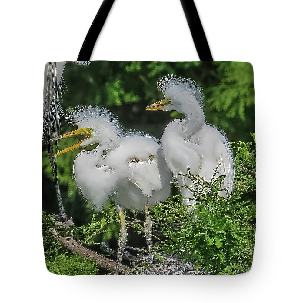 Florida Tote Bag featuring the photograph Baby Egrets by Jane Luxton