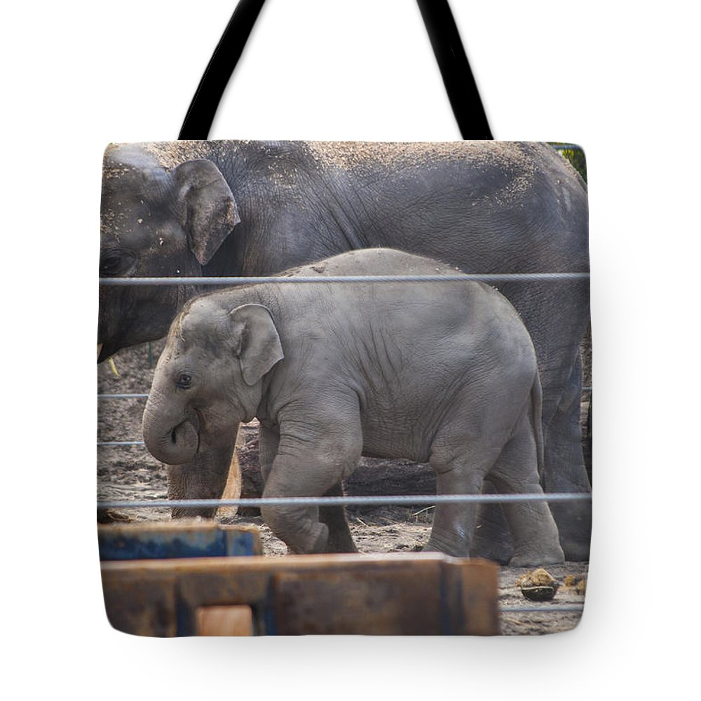 Washington Metro Park Zoo Tote Bag featuring the photograph Baby Elephant Lily by Mandy Judson