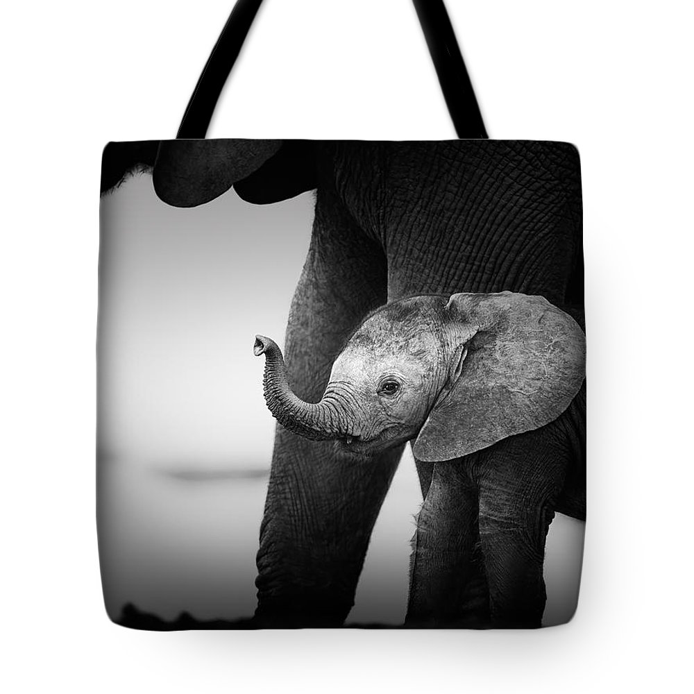 Elephant Tote Bag featuring the photograph Baby Elephant next to Cow by Johan Swanepoel