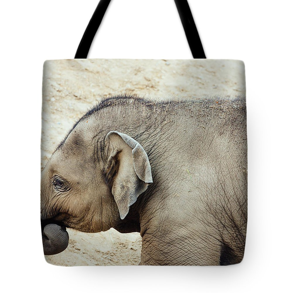 Photography Tote Bag featuring the photograph Baby Elephant by Pati Photography