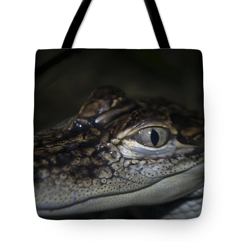 Alligator Tote Bag featuring the photograph Baby Gator by Diego Re