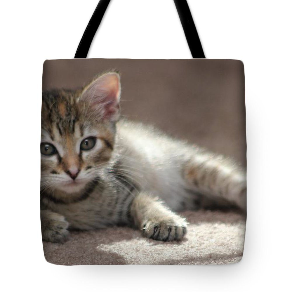Cat Tote Bag featuring the photograph Baby Gretchen by Michelle Powell
