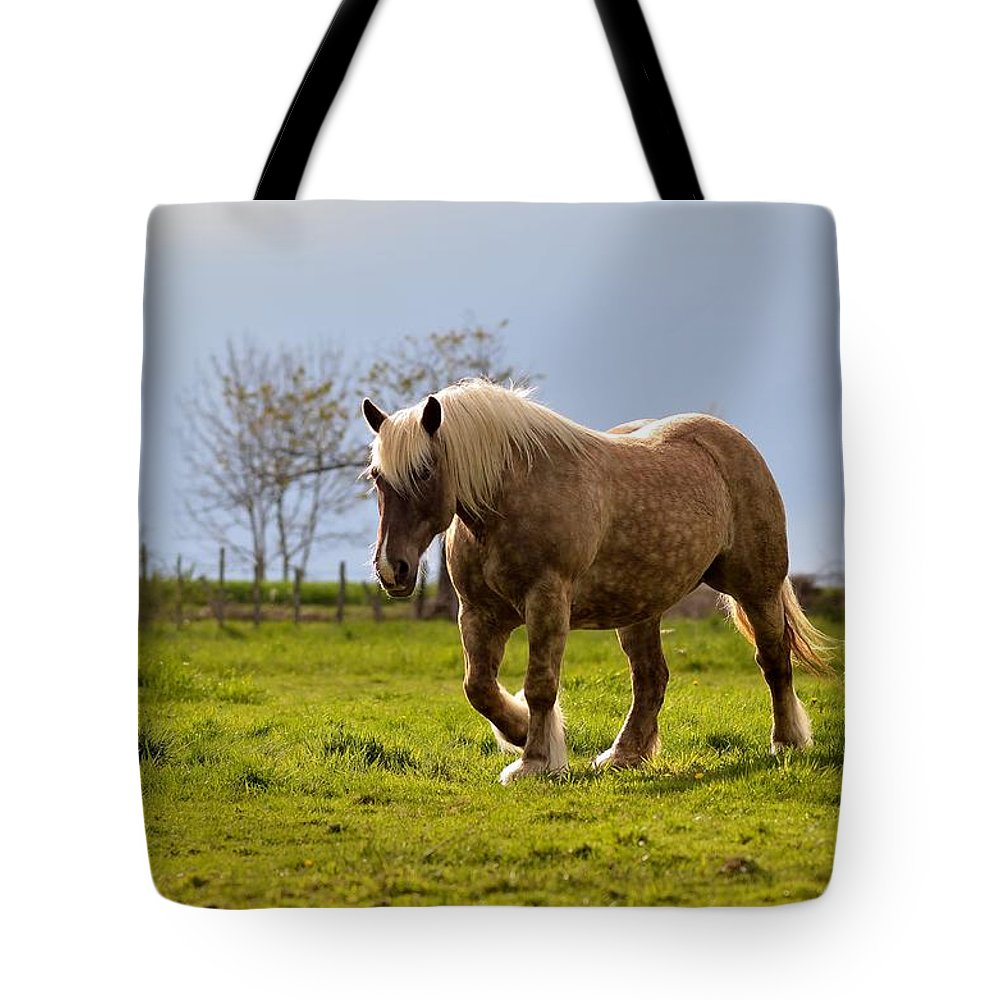 Nice Tote Bag featuring the photograph Back Light Horse by Patrick Pestre