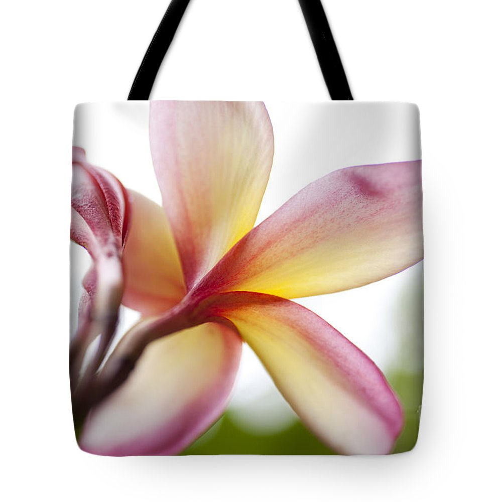 Hawaii Tote Bag featuring the photograph Back Of Plumeria Flower by Charmian Vistaunet