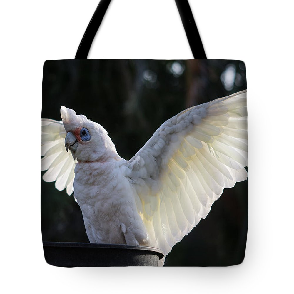 Australia Tote Bag featuring the photograph Back Off by Michael Podesta