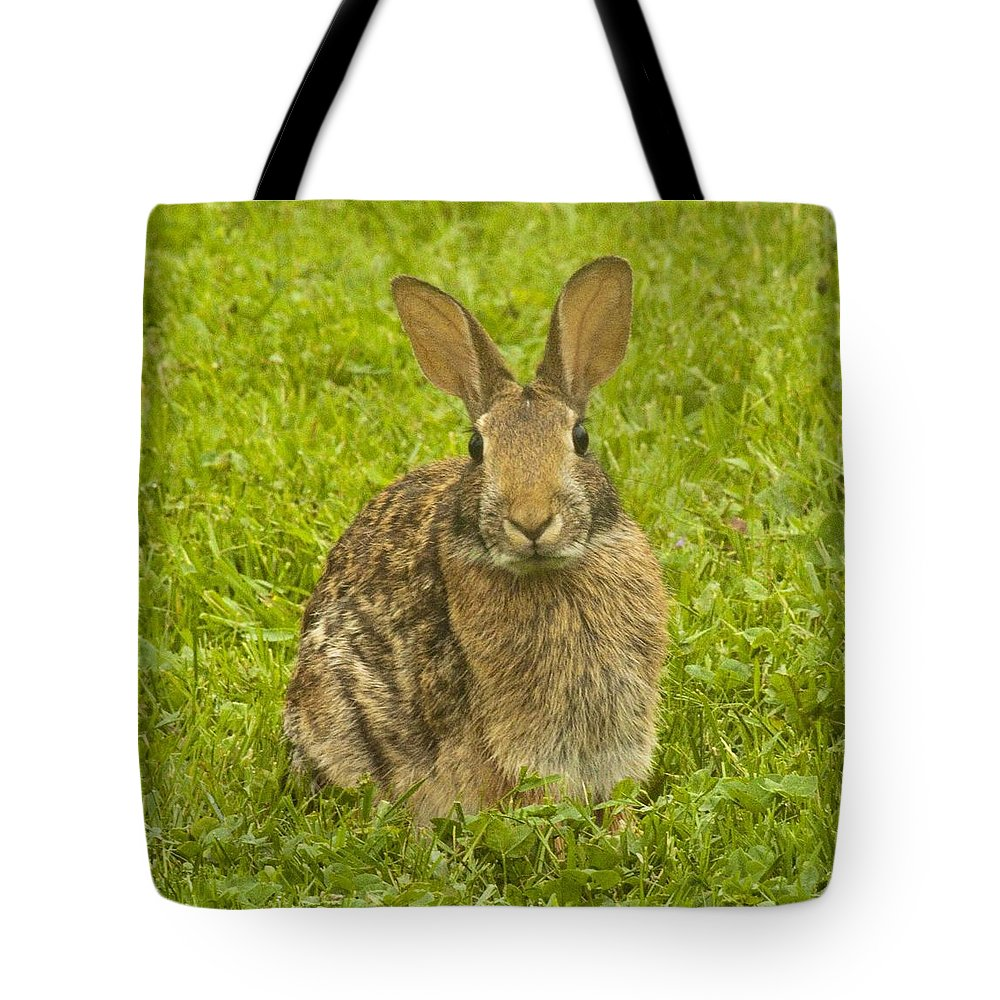 Rabbit Tote Bag featuring the photograph Backyard Bunny by Darleen Stry
